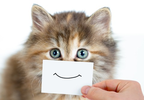 manage smiling cat clips